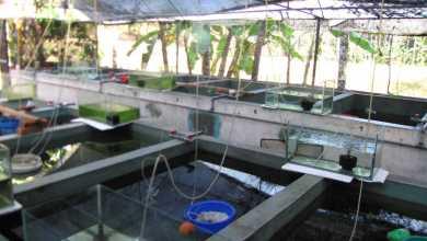 Photo of Mumbai to get a breeding center soon