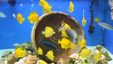 Photo of First Marine Fish For Your Tank [Top 5]