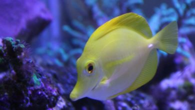 Photo of Awesomeness of the Yellow Tang