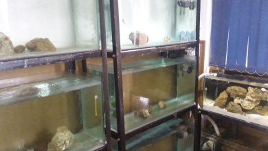 Photo of Home reef aquarium vs shop system, Home for marine life