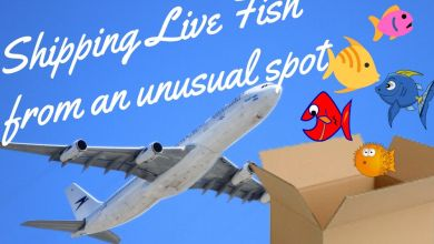 Photo of Shipping Live Fish from an unusual spot is a fishy business