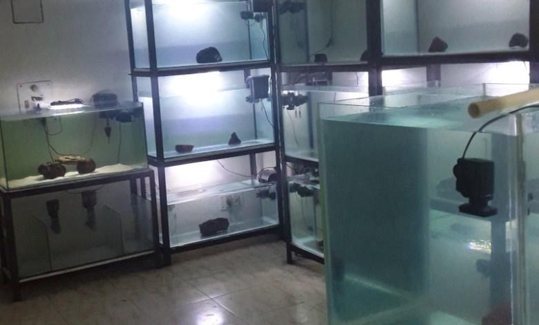 Marine Aquarium Near Me_India