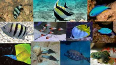 Photo of Marine Fish Beginners Should Avoid