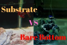 Photo of Substrate vs Bare Bottom in a Saltwater Aquarium