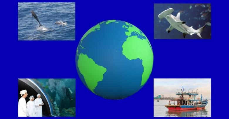 Around the World Sea Life