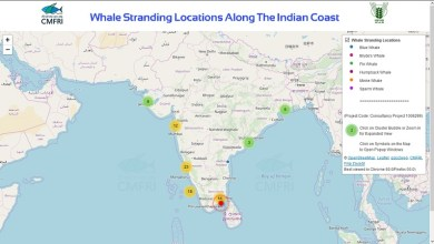 Whale Stranding Infographics on the Indian Coastline