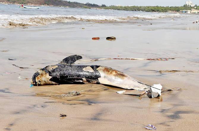 Fishermen to get kits to measure dead rare fish