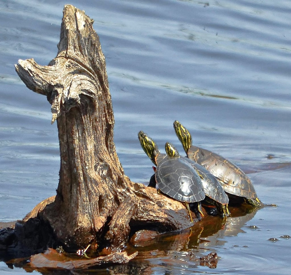 photography turtles