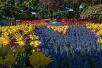 inner tulip garden