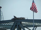 Osprey nest on a bridge.