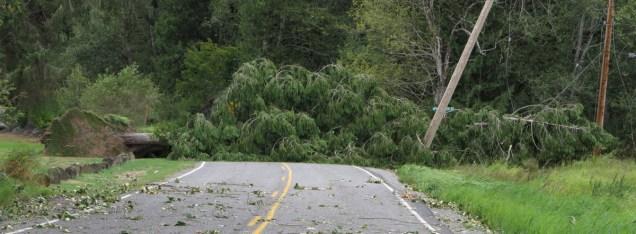 stand of cedar trees fallen
