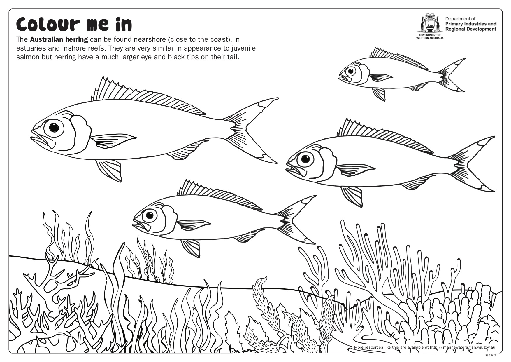 Fishy Fun Sheet Australian Herring