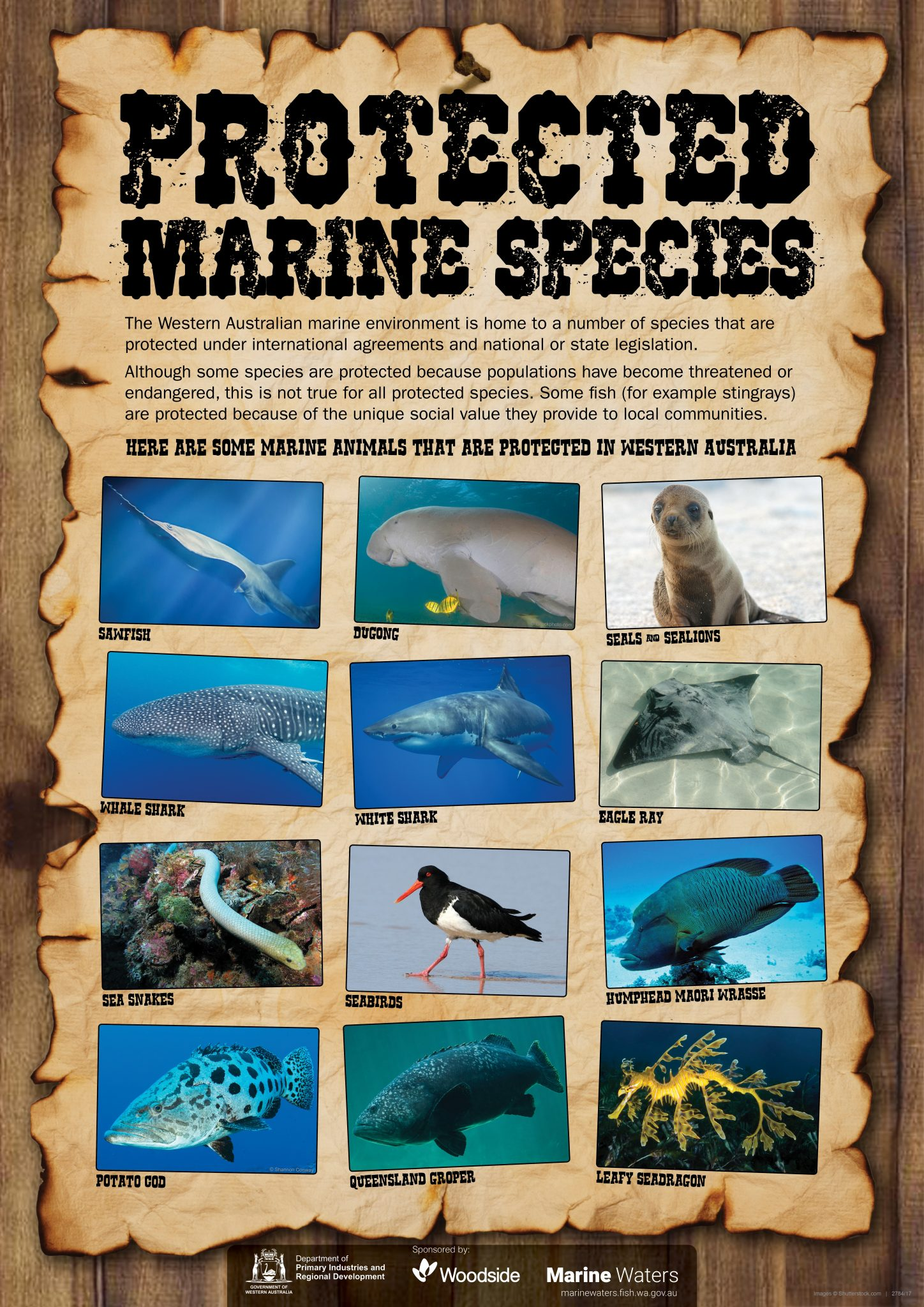 Poster Protected Marine Species Department Of Primary
