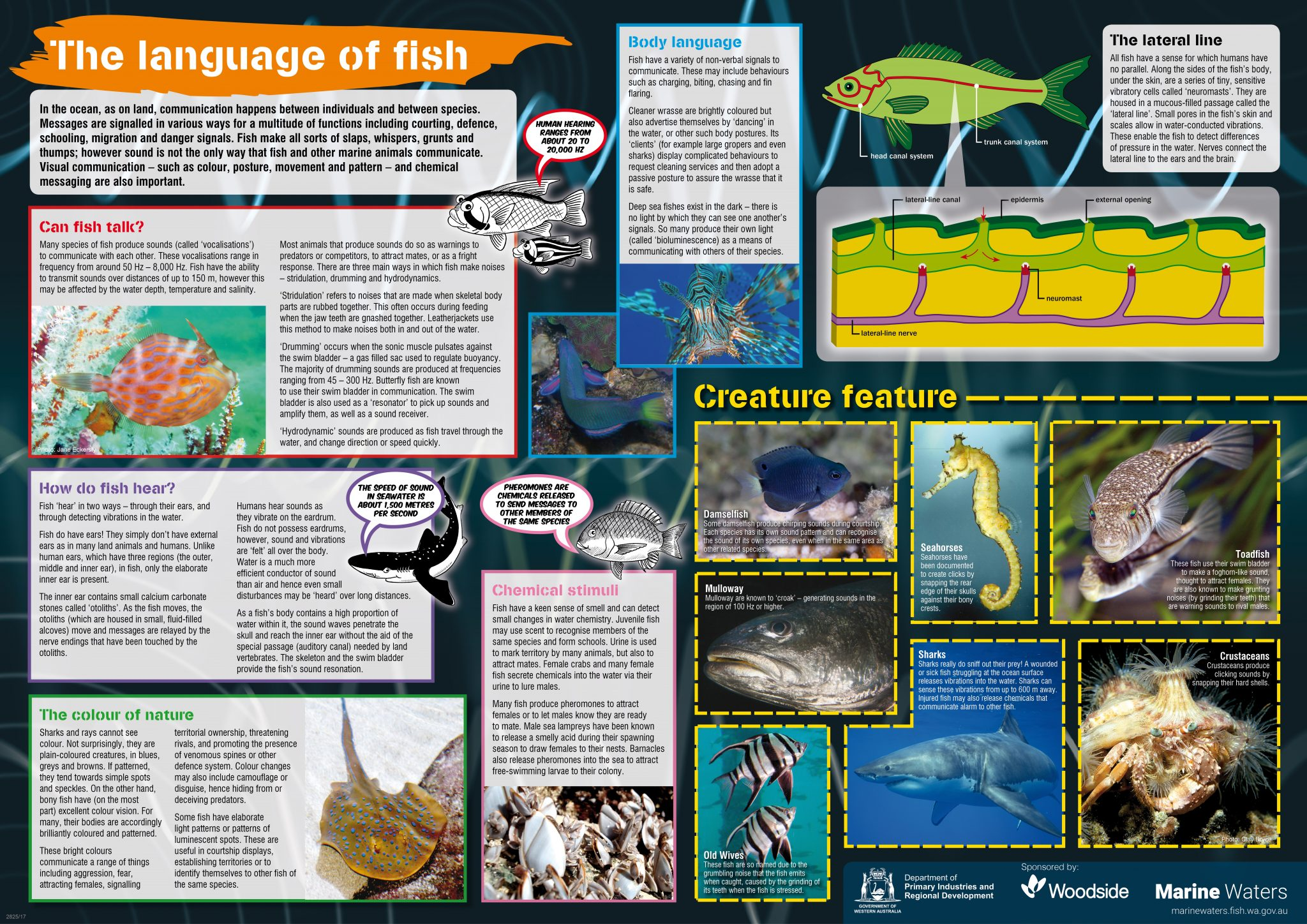 Poster The Language Of Fish Department Of Primary