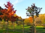 Una bonita valla y árboles en otoño