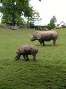 Zoo de Beauval - Il était une maille