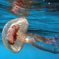 Vi ha toccato una medusa? Nei primi minuti comportatevi così