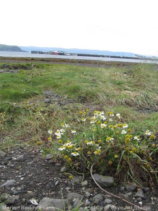 uig-bay-sketch-daisies