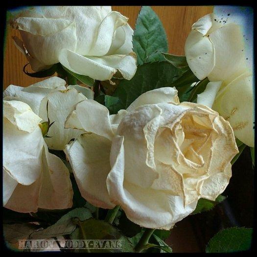 Miss Havisham's Roses (photo)