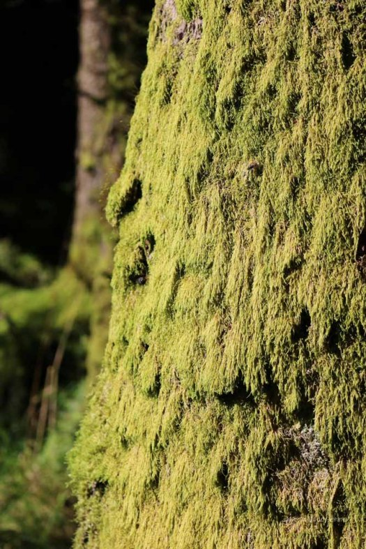 Moss on tree trunk Skye