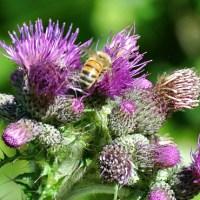 Verhaal in zes woorden met beeld: Insecten