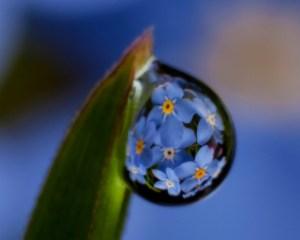 dew drop, droplet, macro, photography, Marion Owen, flower