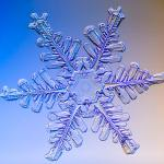 snowflake, real, snow crystal, nitrogen, fertilizer, organic gardening tips, Kodiak, Alaska