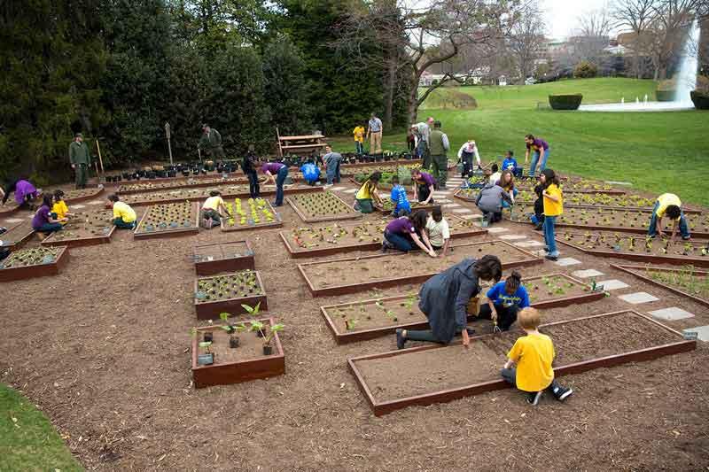 organic gardening, Michelle Obama