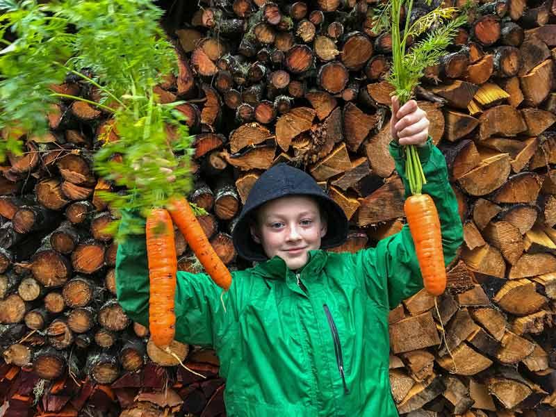 Boy holding giant carrots