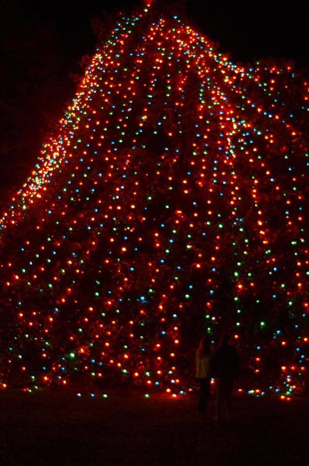 74 Marion Sc Christmas Tree Lighting 2017