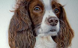 Nancy the spaniel - Watercolour pet portrait