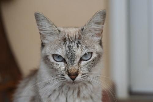 Mincha: one of my cutest cats