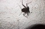Whip Scorpion - it's harmless