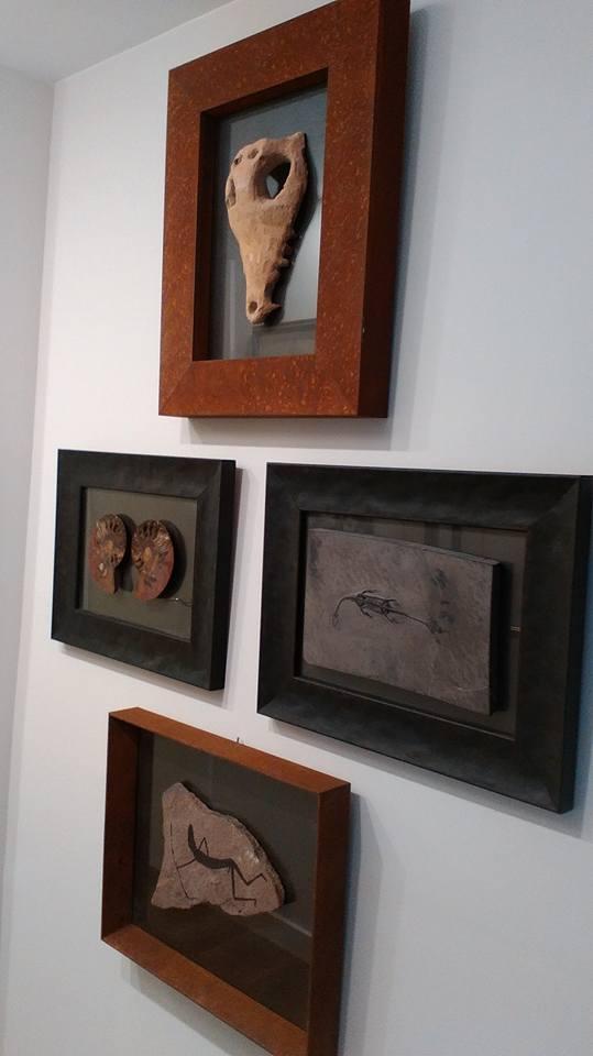 Colección de fósiles enmarcada | Marisa Cervantes