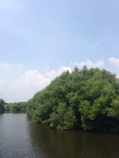 Kalau naik boat, kita akan mengelilingi area konservasi ini