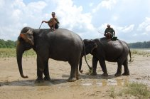 Chitwan - the Elephants