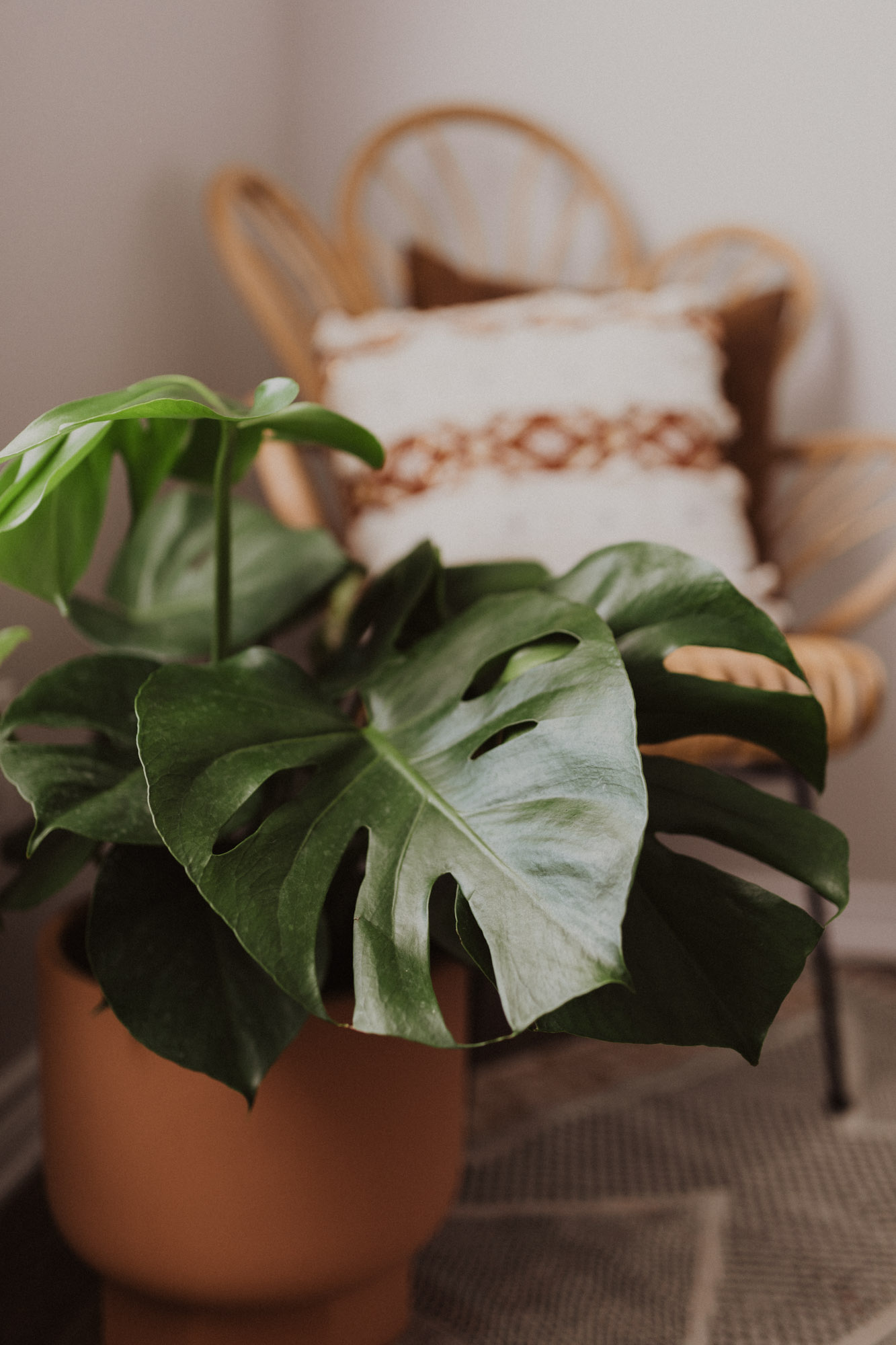 monstera plant decor in a home office