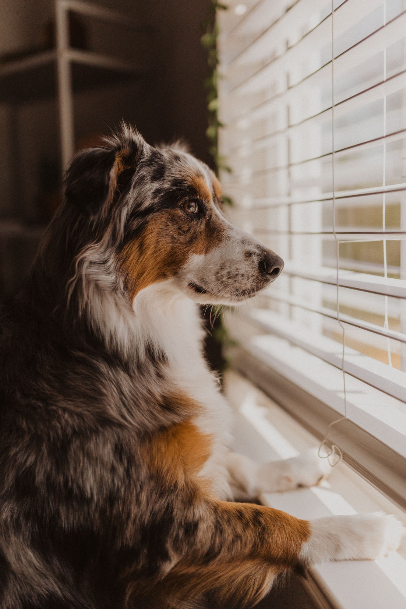 Cute puppy looking out a bright window