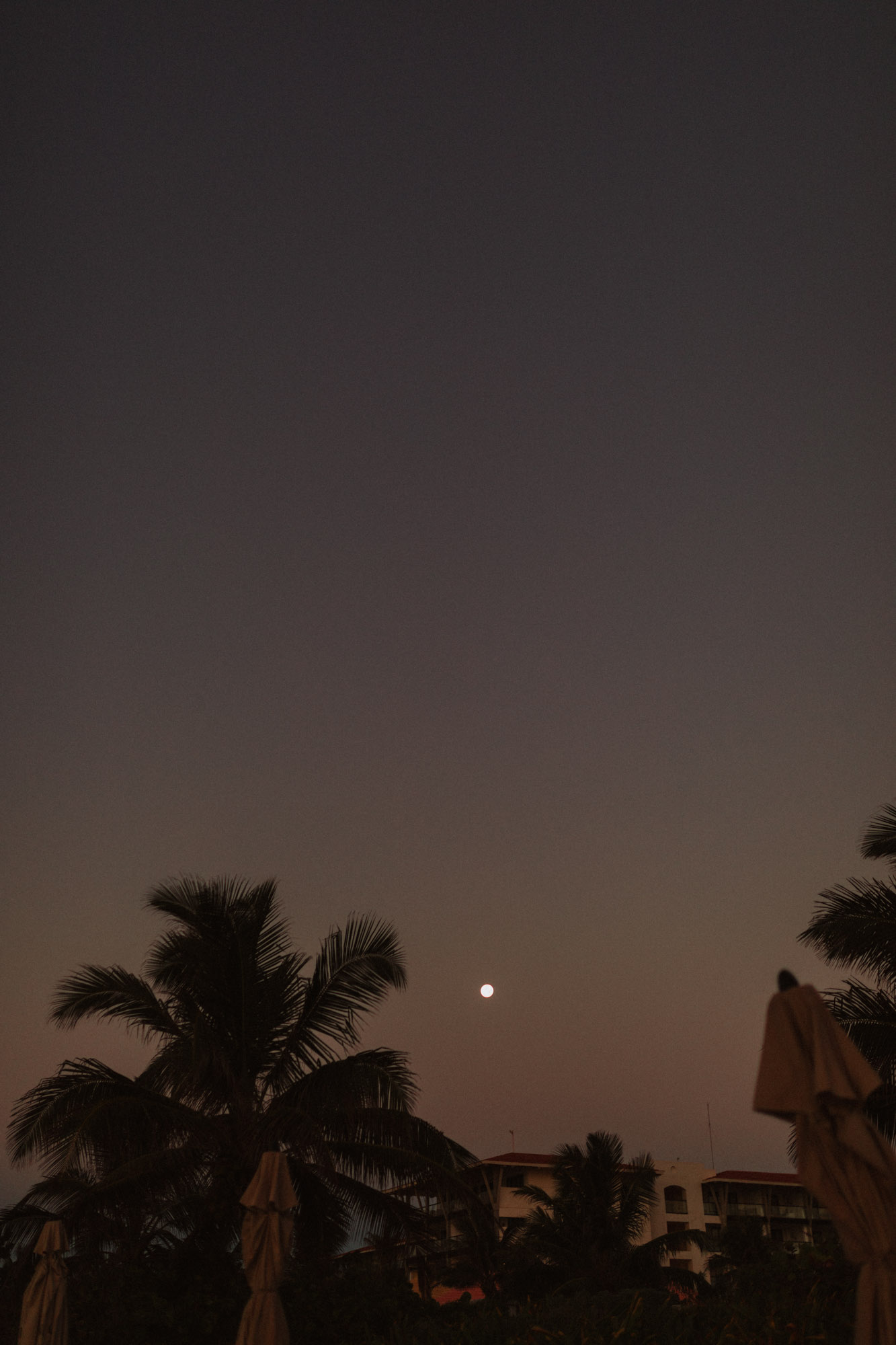 moon over palm trees in tropical city