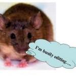 editing hamster