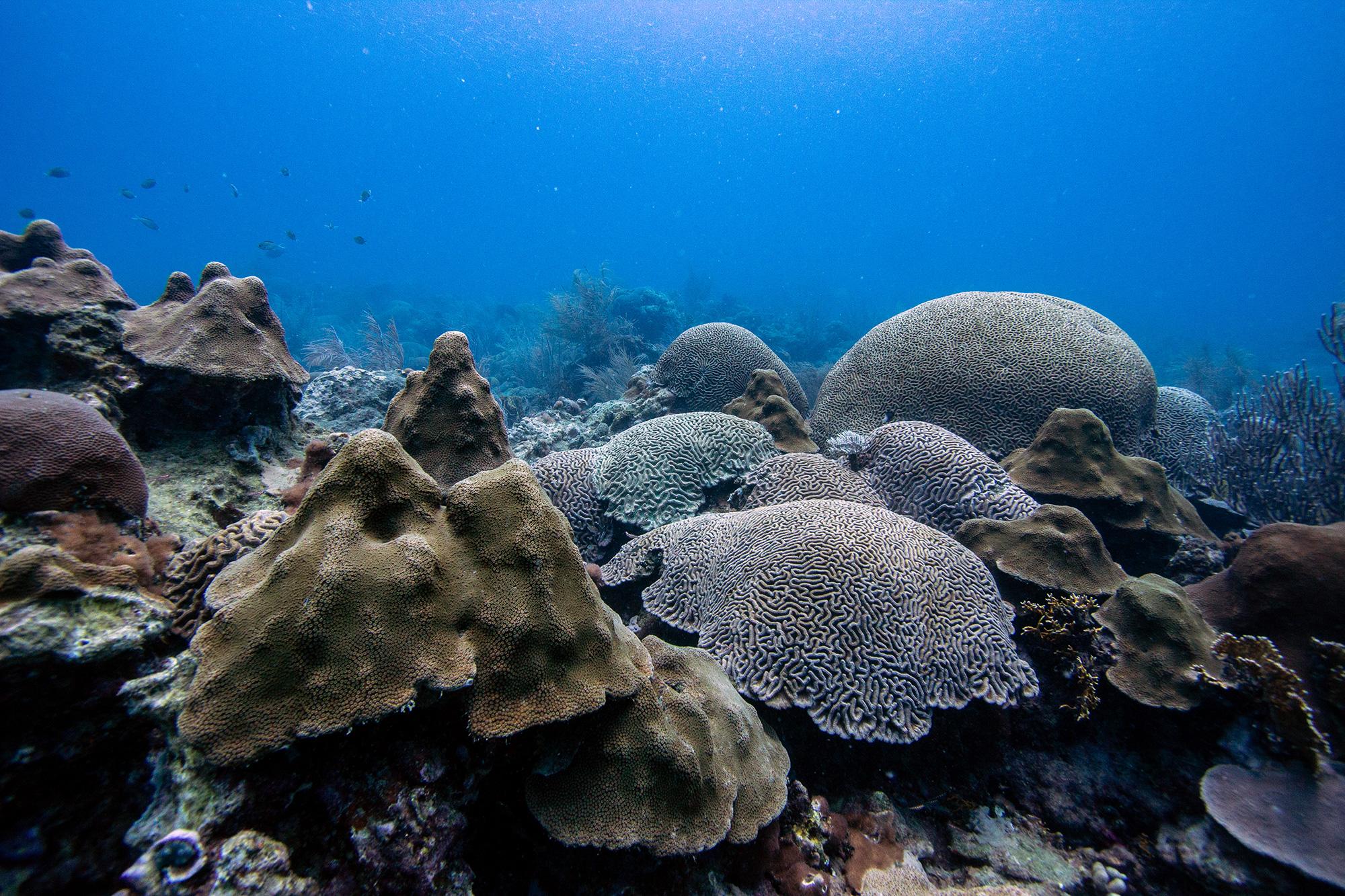 Mt Irvine with Brain Coral
