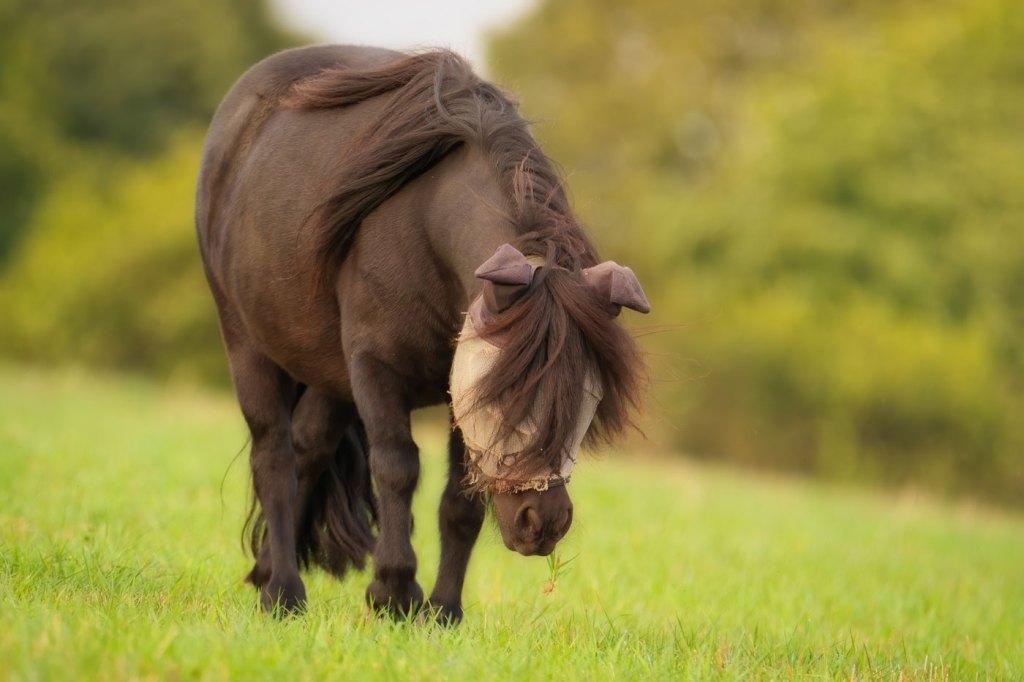 Wildlife photography - poney - animal