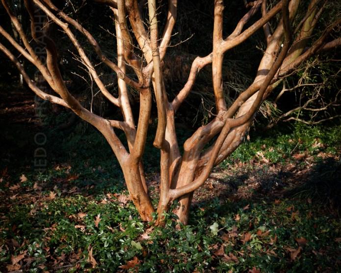 Trees-n-things-SM-(01.06.16)-5