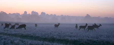 Misty morning at Richmond Park