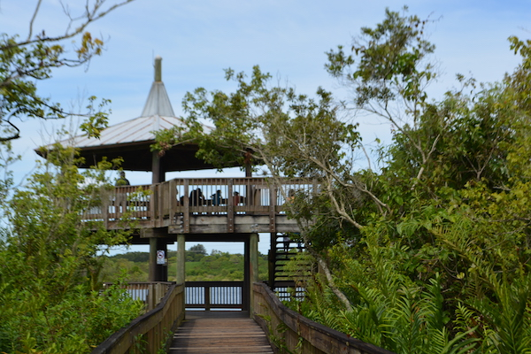 observation tower at Sawgrass Lake Park in St Petersburg Florida