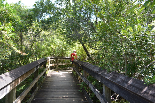 man standing on a quiet boardwalk path at Boyd Hill Nature Preserve in St Petersburg Florida on a staycation day trip