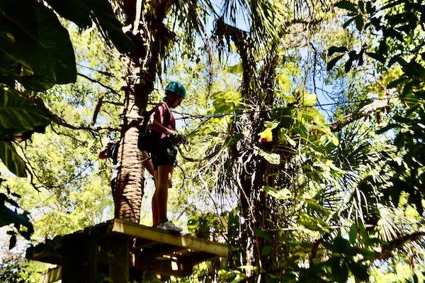 visitors enjoying Treetop Trek at the Brevard Zoo