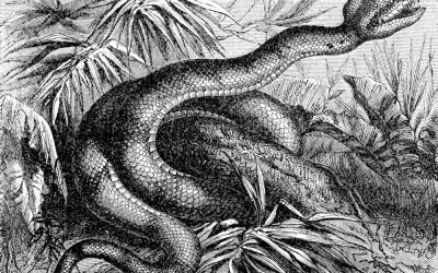 Evolution, Genesis and creation: Snakes' legs found