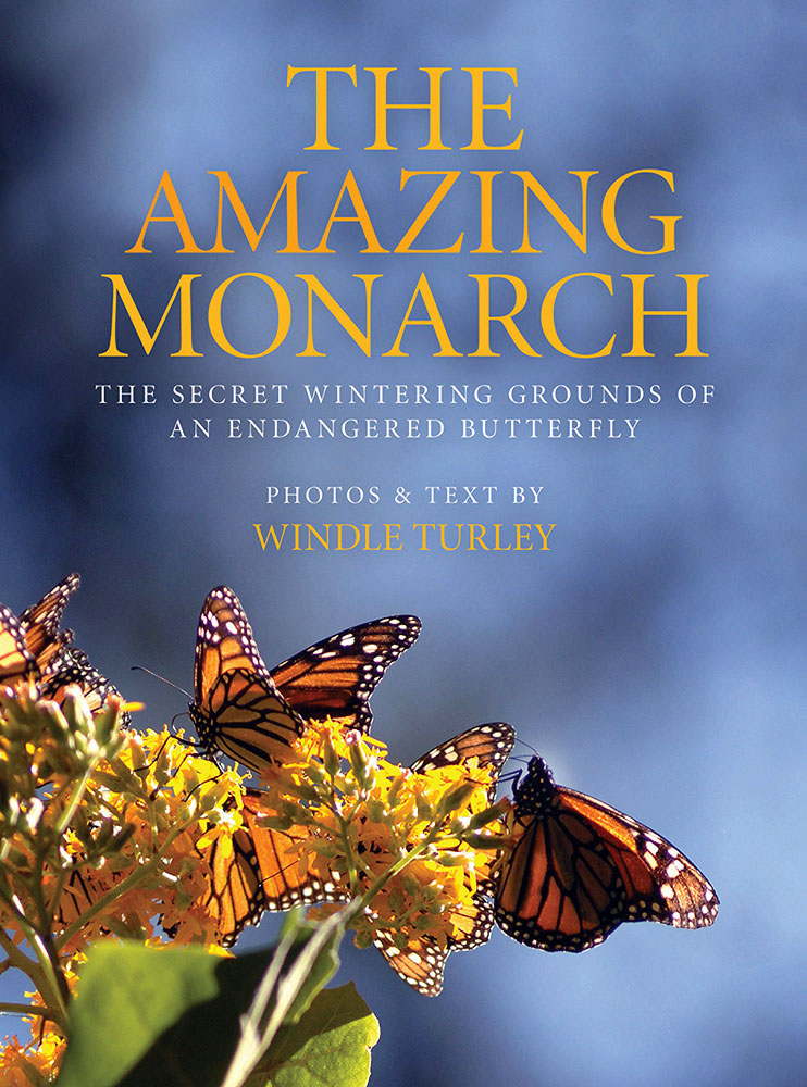 The Amazing Monarch