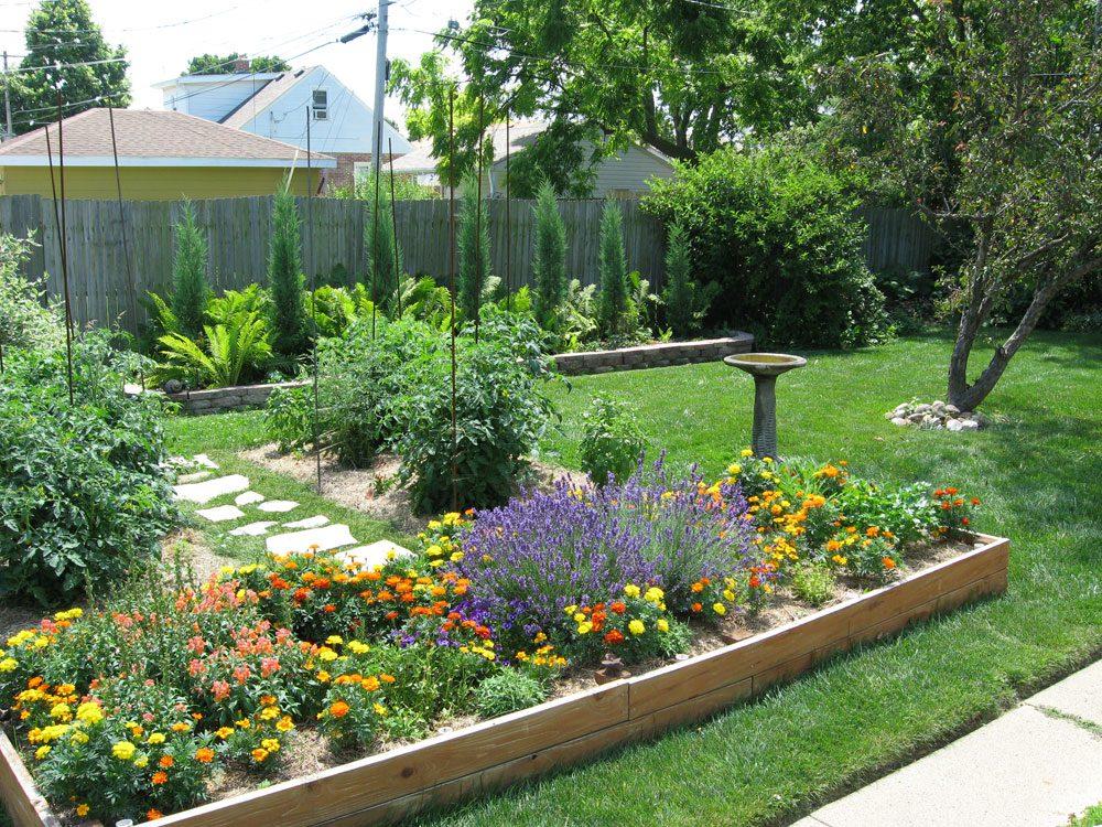 Taylor Juniper bushes: Backyard evergreen hedge on Back Garden Ideas id=99525